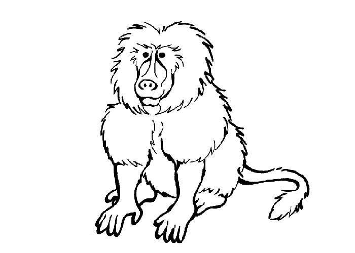 baboon coloring pages 70 animal colouring pages free download print free