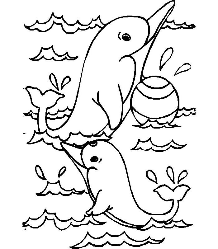 baby dolphin coloring sheet
