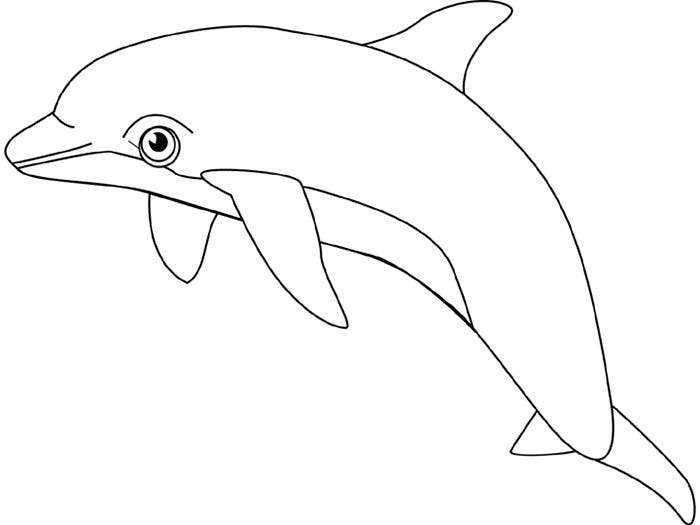 beautiful dolphin template