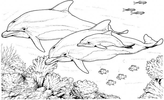 bottlenose dolphins coloring page