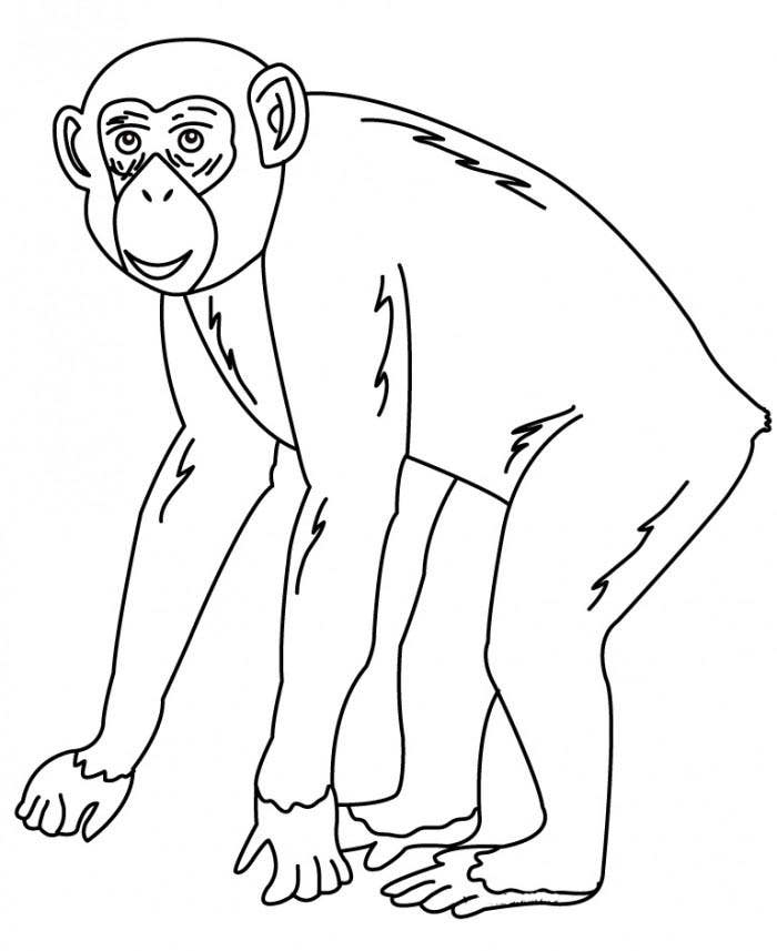 chimpanzee coloring page for kids - Drawing And Colouring Pictures For Kids