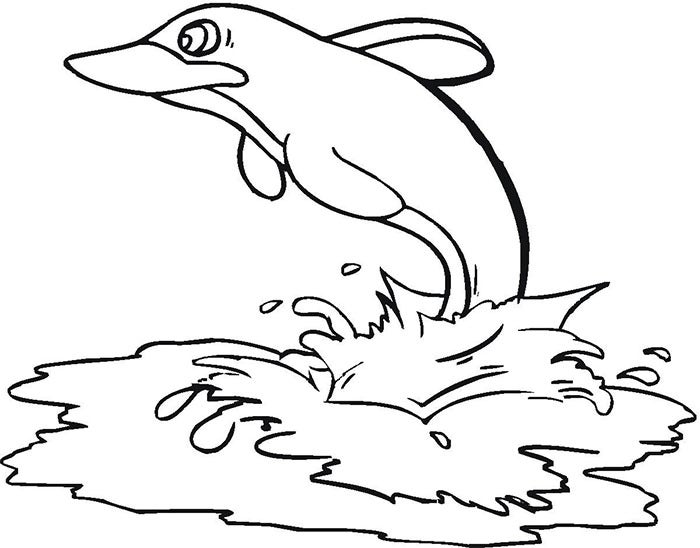 dolphin coloring page for adults