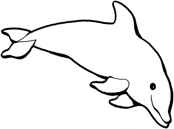 Dolphin Template Animal Templates Free amp Premium
