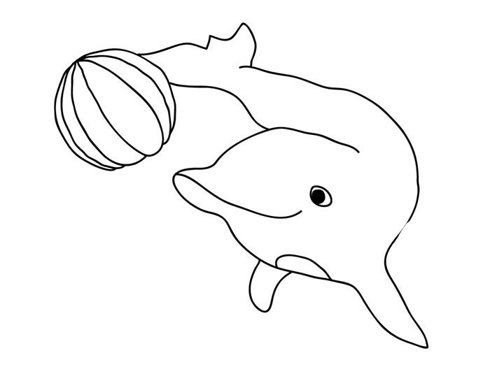 dolphin craft template