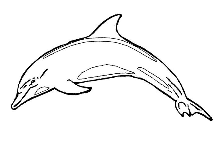 how to draw a dolphin tale