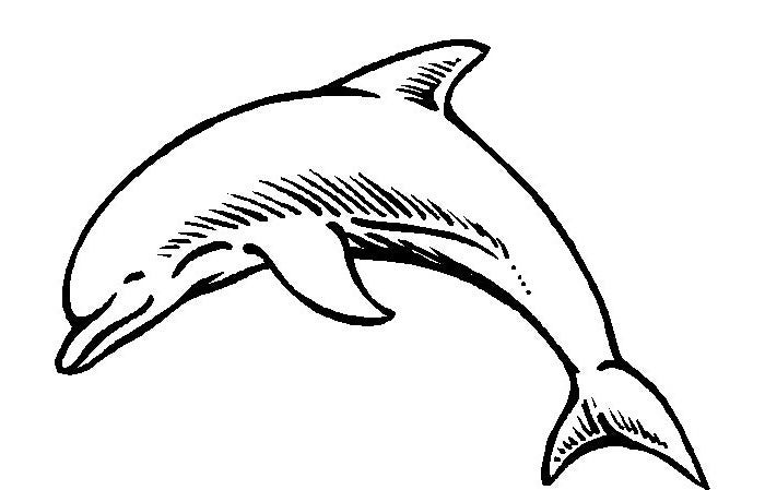 Dolphin Template Animal Templates