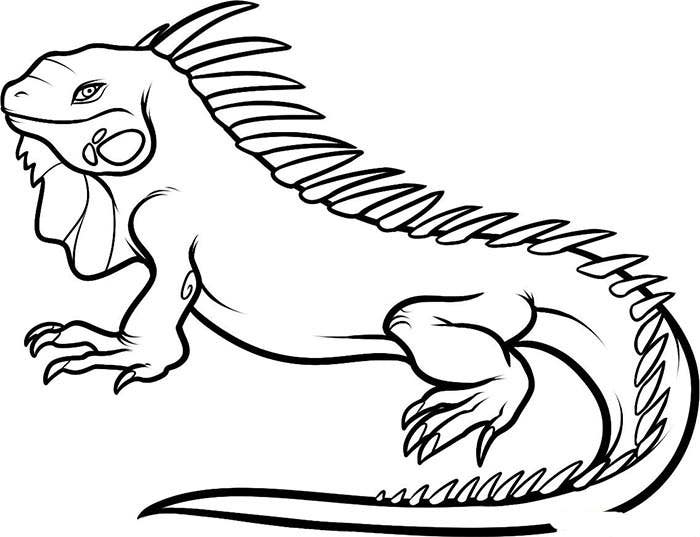 70 animal colouring pages free download print free for Iguana coloring pages