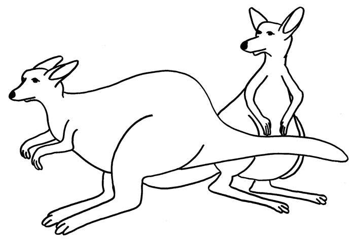 kangaroo template to dwnload