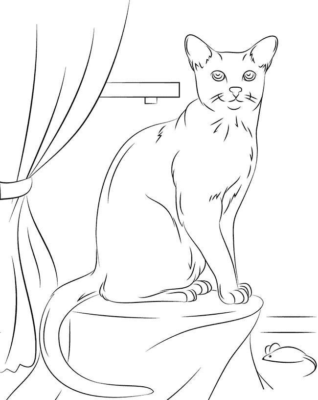 russian blue cat coloring page