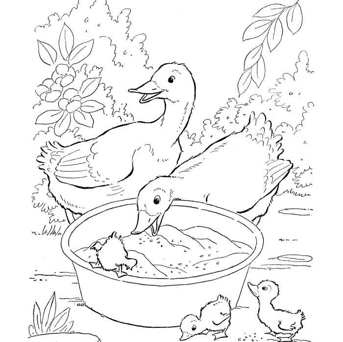 cute duck animalshape template