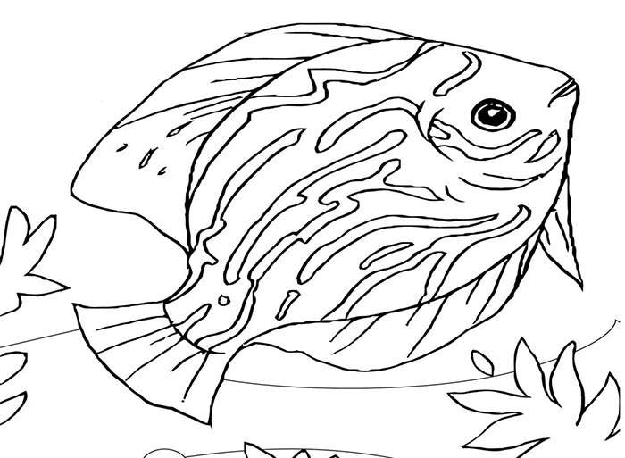 fish animal templates