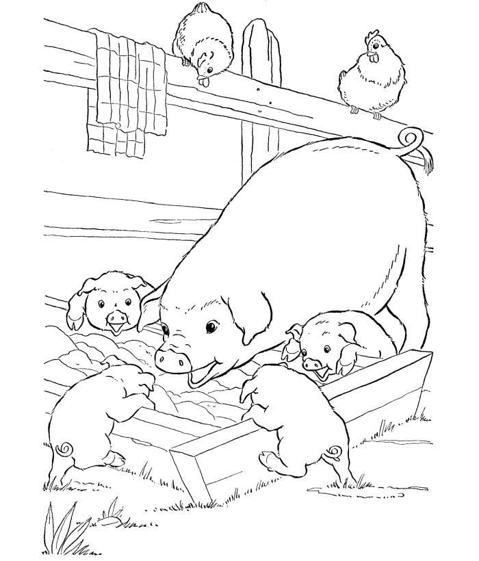 pig animal coloring page template