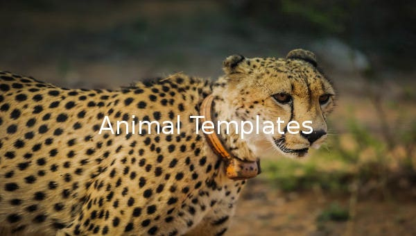 1545 Free Animal Templates Printable Animal Crafts Colouring
