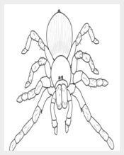 Outline of a Spider Template