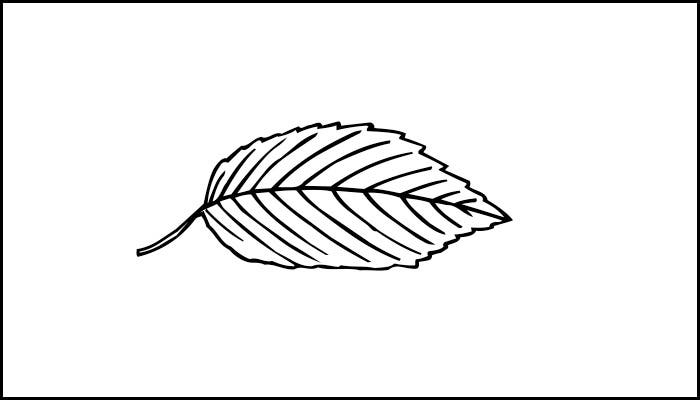 Cool Leaf Template Free Download