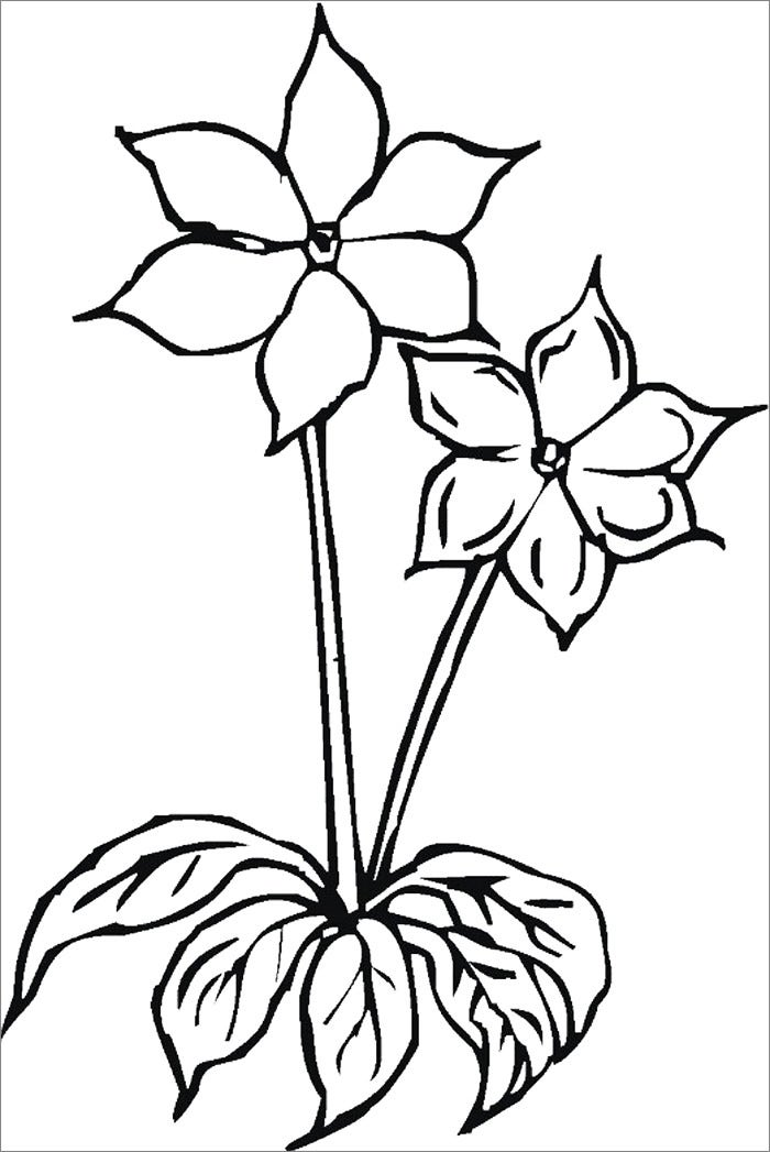 flower template for coloring1