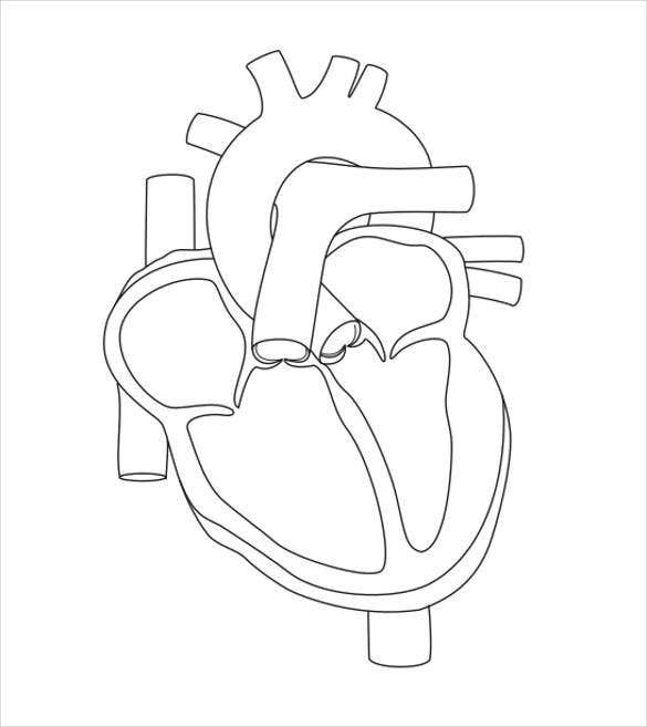 free blank human heart diagram download
