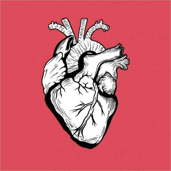 hand-drawn-human-heart-vector-image-download