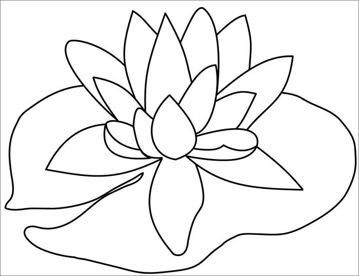lily pad flower1