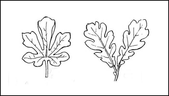 Simple Free Leaf Template Download