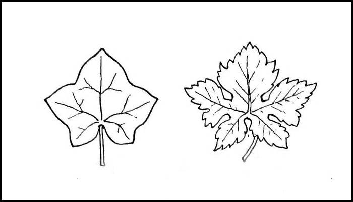 Template Free Download Leaf
