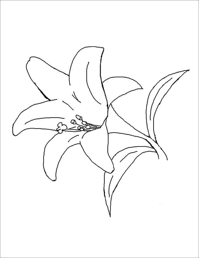 Flower Template - Free Templates   Free & Premium Templates