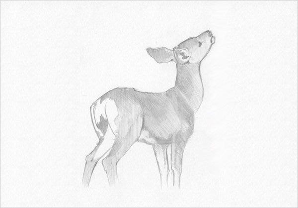 awsome deer pencil drawing