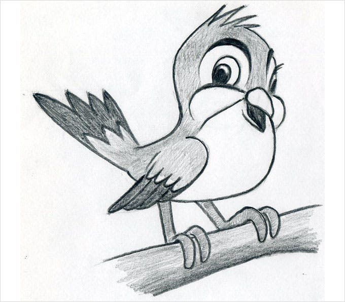 Cartoon bird beautiful and cute cartoon bird pencil drawing