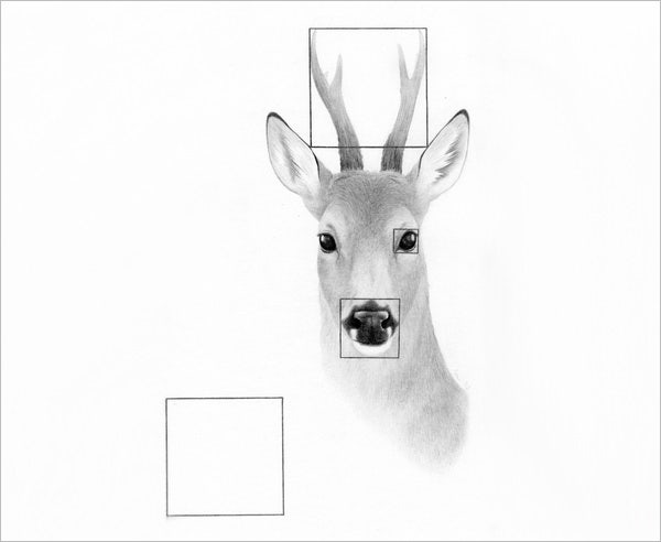 clear deer pencil drawing
