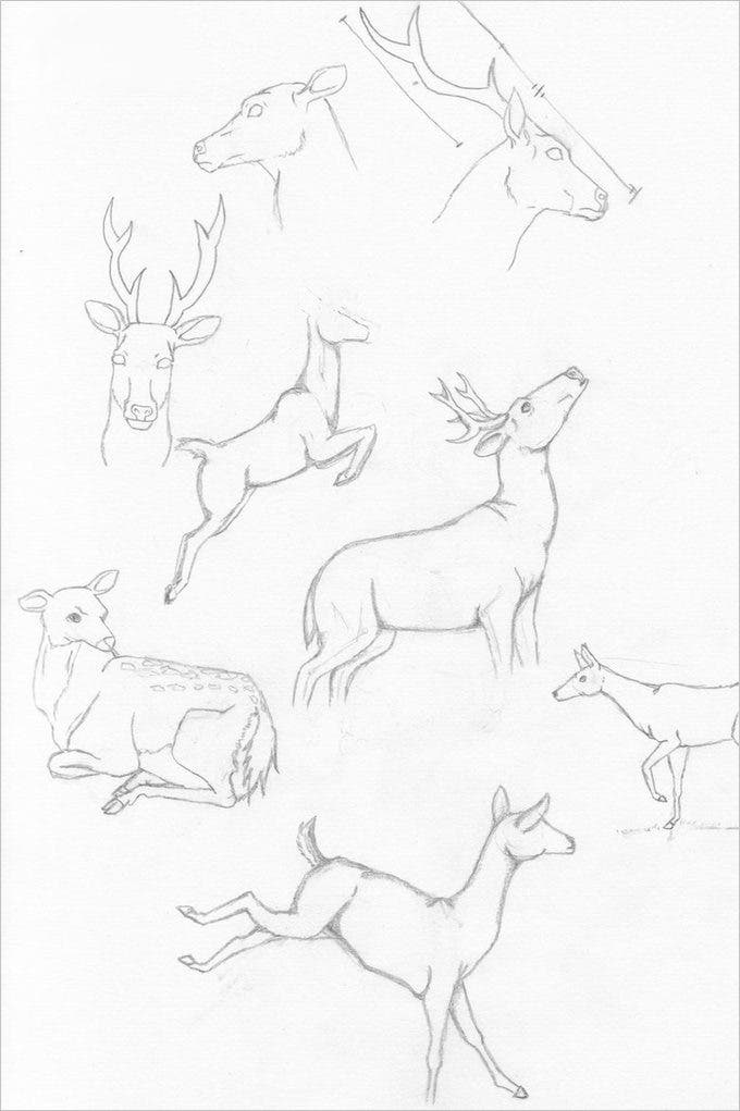 collection deer drawing art