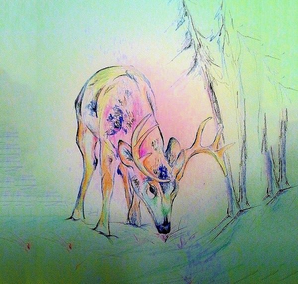 colorful deer pencil drawing