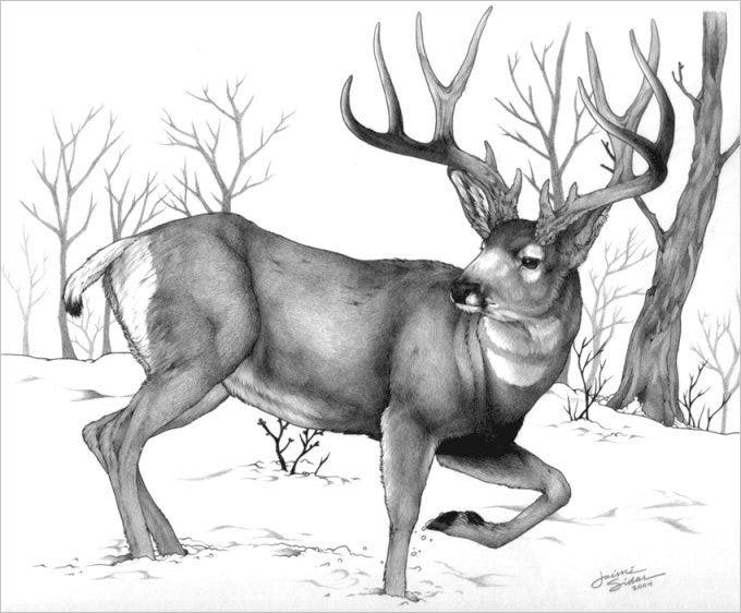 cool deer drawing