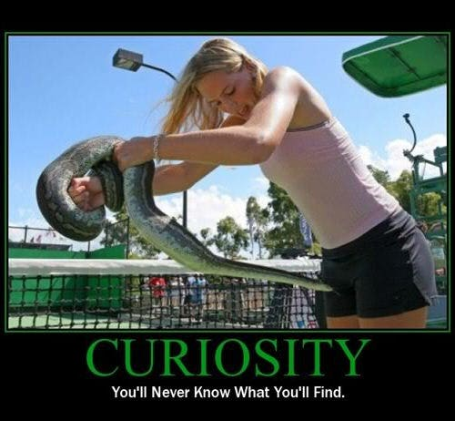 curiosity demotivational posters
