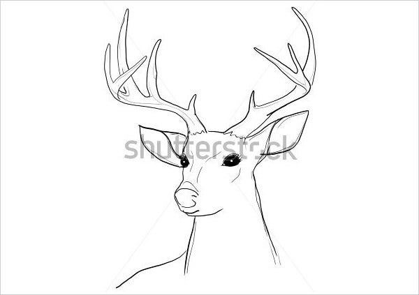 deer pencil line drawing