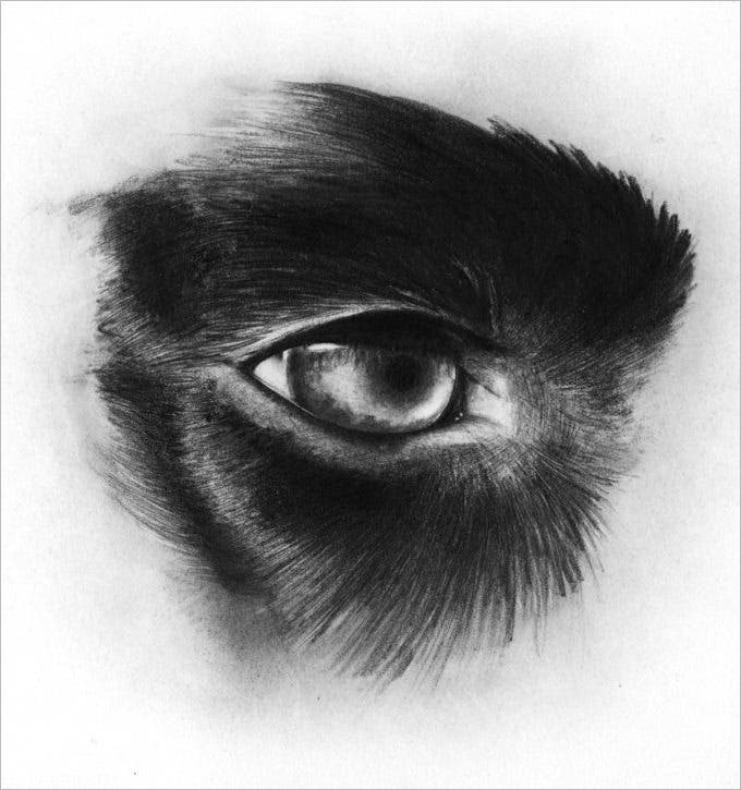 dog eye pencil drawing