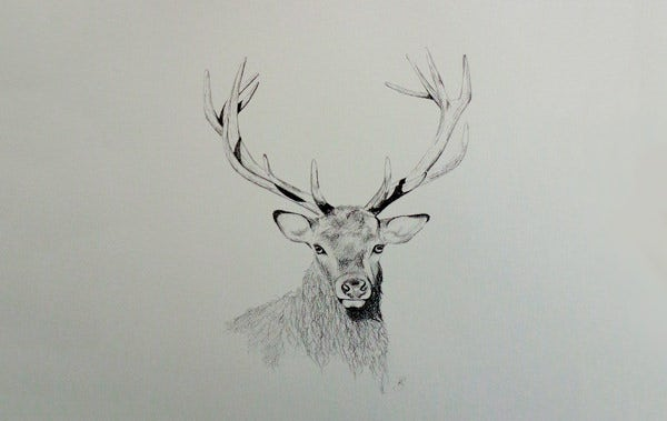 Line Drawings Of Animals Deer : 24 free deer drawings & designs premium templates