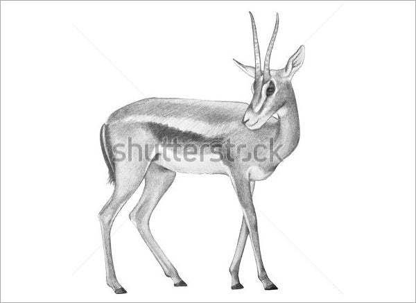 fair deer drawing
