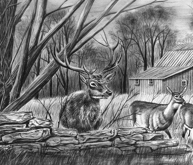 field deer pencil drawing