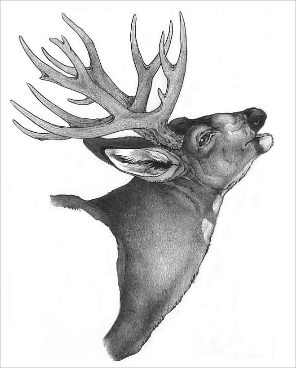 fine deer drawing art