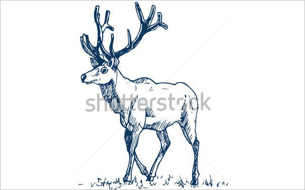 gentle deer drawing art
