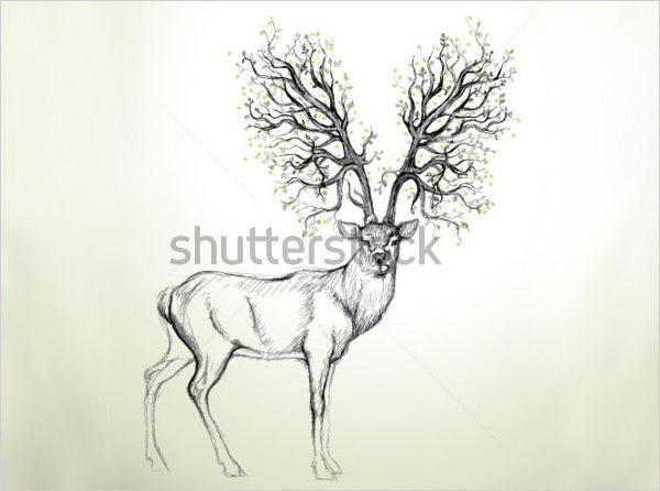 graciours deer drawing