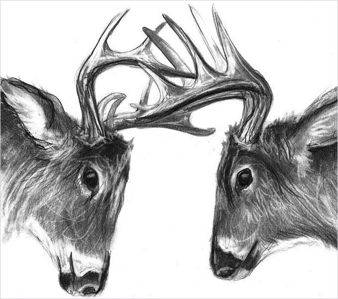 headon deer drawing art