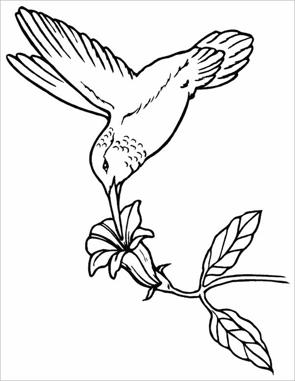 humming bird template
