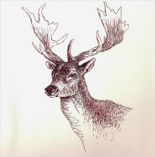 ink art deer drawing