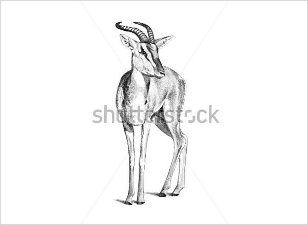 lovely deer pencil drawing