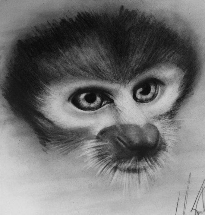 monkey pencil eye drawing