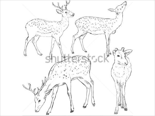 multiple deer pencil line drawing