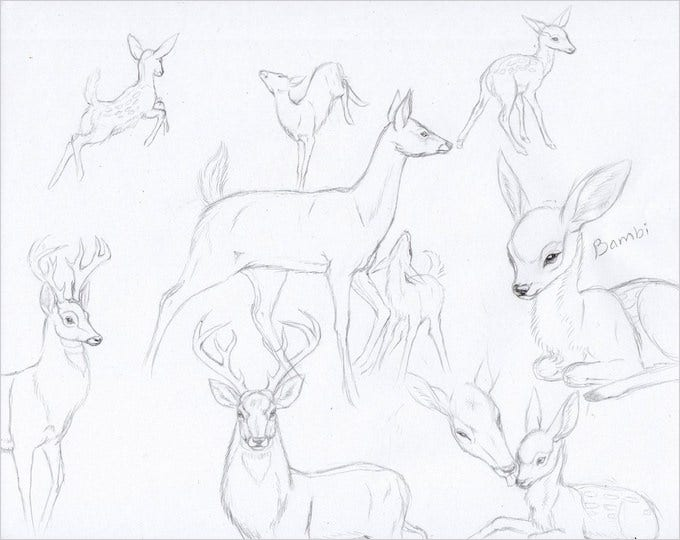original deer pencil drawing