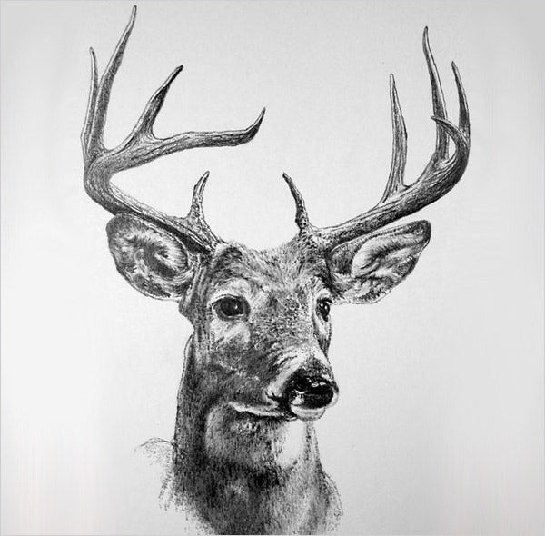 royal deer drawing art
