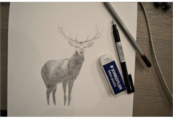 simple deer pencil drawing